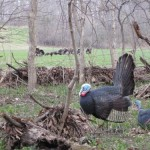 Steve-illinois-turkey-hunt-2011-4