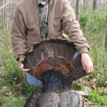 illinois-eastern-wild-turkey-005